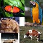 Bé học các con vật