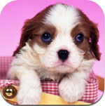 Cute Puppy Wallpaper for iPad