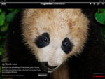 The Guardian Eyewitness for iPad