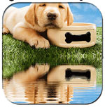 WaterMyPhoto  icon download