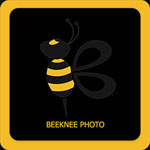 Bee Photos  icon download